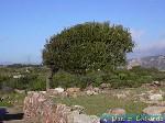 Mont Sirai, Sardaigne